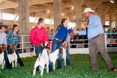 ks_state_fair_2019_goats-9
