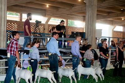 ks_state_fair_2019_goats-4