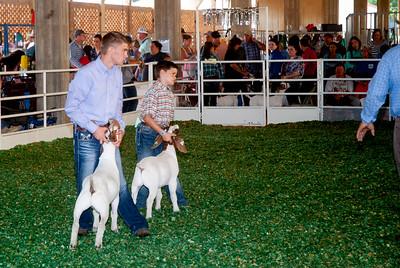 ks_state_fair_2019_goats-6