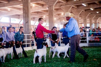 ks_state_fair_2019_goats-10