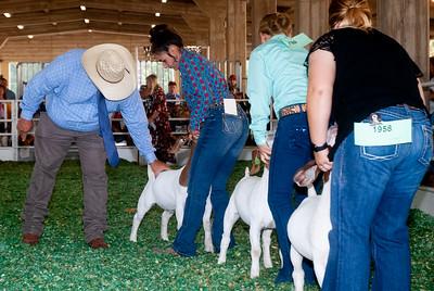 ks_state_fair_2019_goats-23