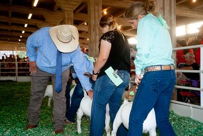 ks_state_fair_2019_goats-18