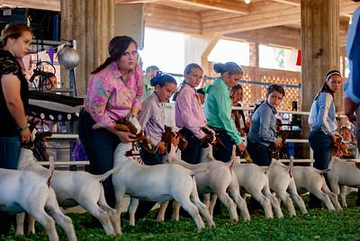 ks_state_fair_2019_goats-16