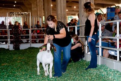 ks_state_fair_2019_goats-21