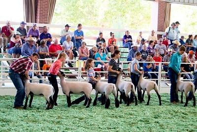ks_state_fair_2019_lambs-7
