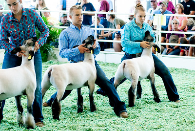 ks_state_fair_2019_lambs-18