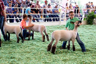 ks_state_fair_2019_lambs-9