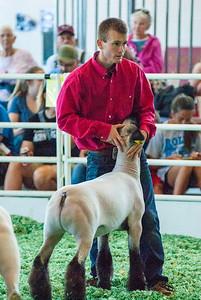 ks_state_fair_2019_lambs-14
