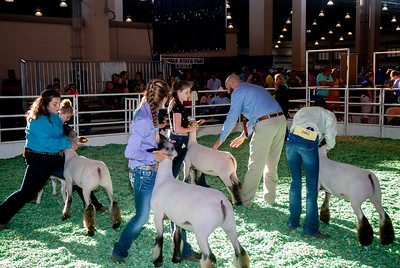 ks_state_fair_2019_lambs-4