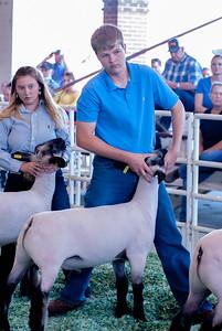ks_state_fair_2019_lambs-22