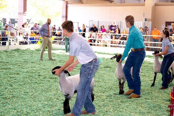 ks_state_fair_2019_lambs-5