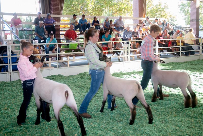 ks_state_fair_2019_lambs-1