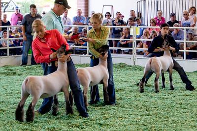 ks_state_fair_2019_lambs-11