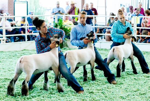 ks_state_fair_2019_lambs-21