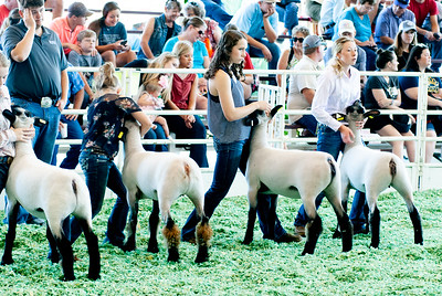 ks_state_fair_2019_lambs-19