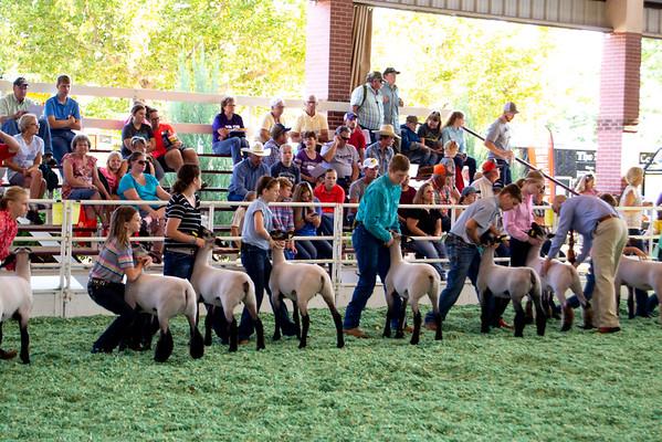 ks_state_fair_2019_lambs-6