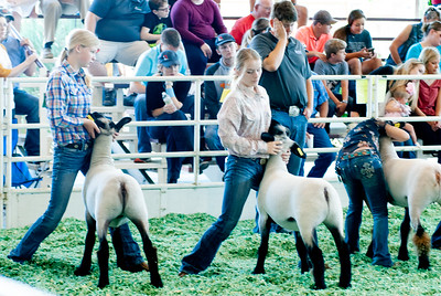 ks_state_fair_2019_lambs-20