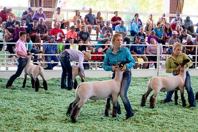 ks_state_fair_2019_lambs-10