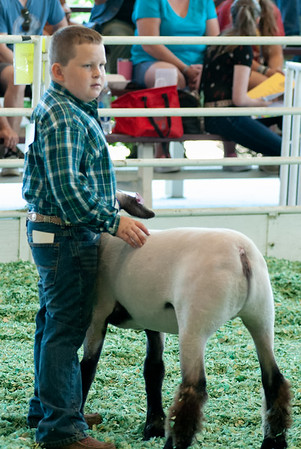 ks_state_fair_2019_lambs-17