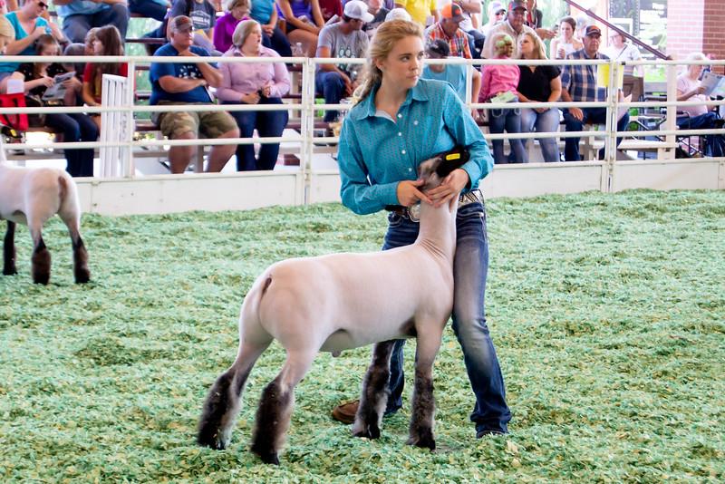 ks_state_fair_2019_lambs-12