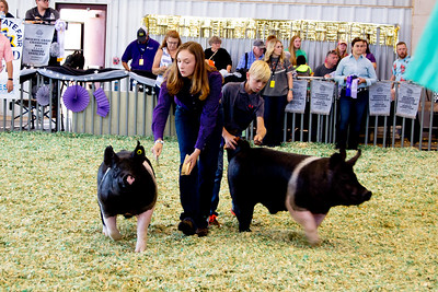 ks_state_fair_2019_swine-16