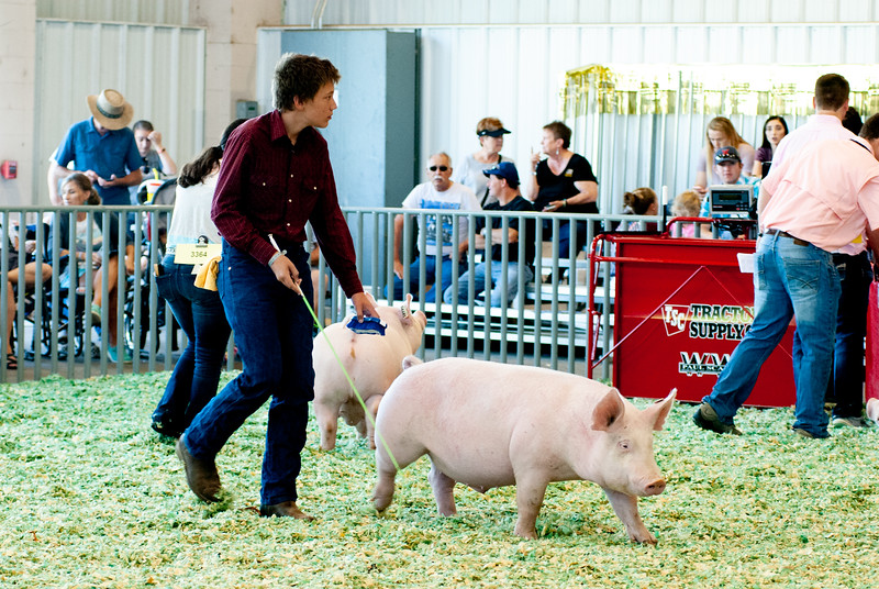 ks_state_fair_2019_swine-24