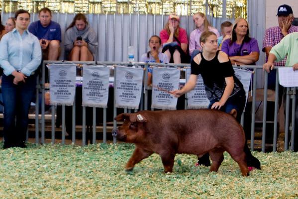 ks_state_fair_2019_swine-3