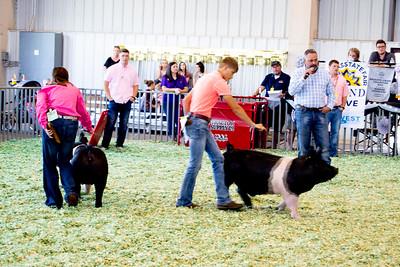 ks_state_fair_2019_swine-19