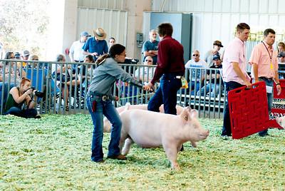 ks_state_fair_2019_swine-22