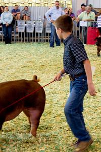 ks_state_fair_2019_swine-2