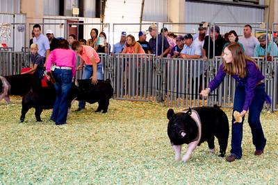 ks_state_fair_2019_swine-18