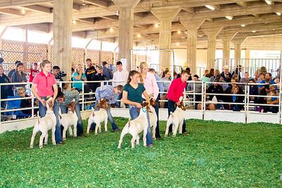 201808_kansas_goats-5