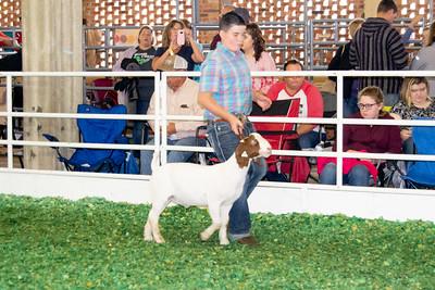 201808_kansas_goats-2