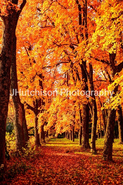 DG0008 - Colorful Path Thru The Maples