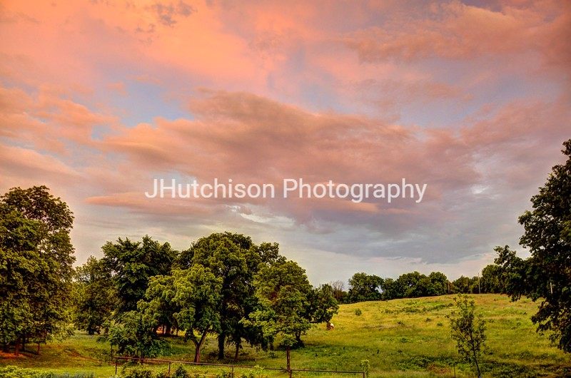 1250 - Pink Cloud Meadow