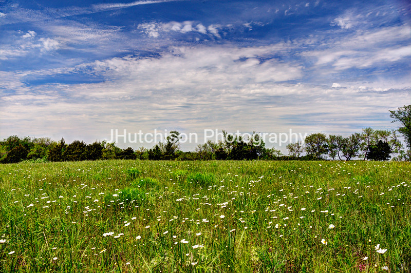FR0025 - A Field of Daisies