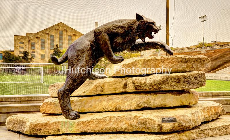 KSU0001 - Heritage Cat
