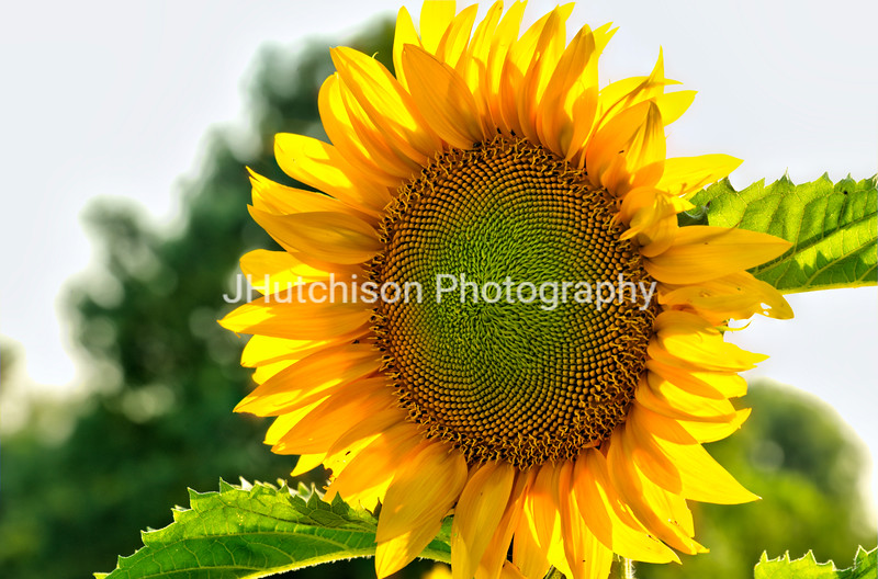 SUN0018 - Bright and Cheery