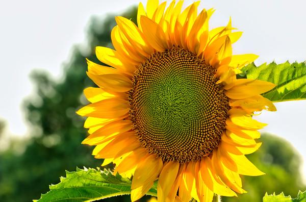 SUN0018 - Bright and Cheery