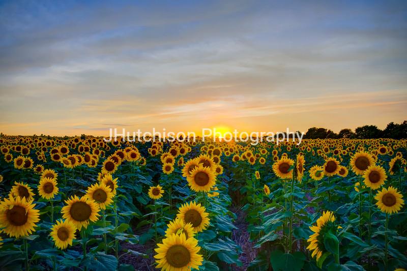 SUN0025 - A Golden Kansas Sunset