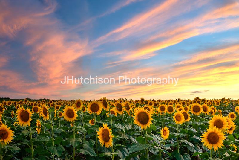 SUN0021 - Cotton Candy Sunset