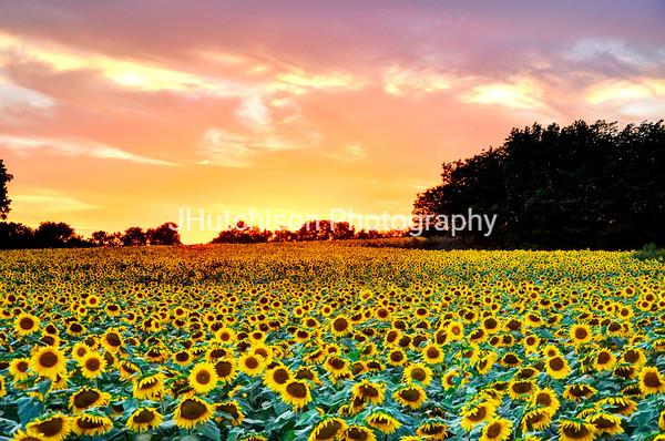 SUN0014 - Grinters Farm Sunset