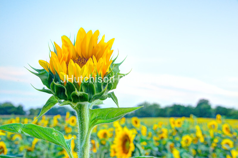 SUN0017 - Reaching For the Sky