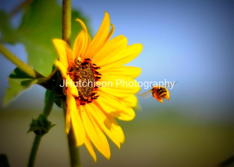 1160 - Gathering Pollen