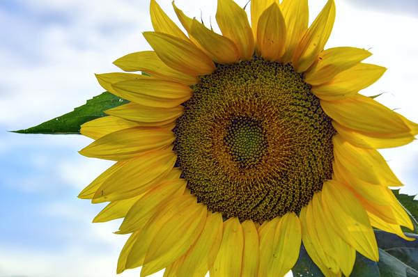 SUN0019 - I've Got Sunshine on a Cloudy Day