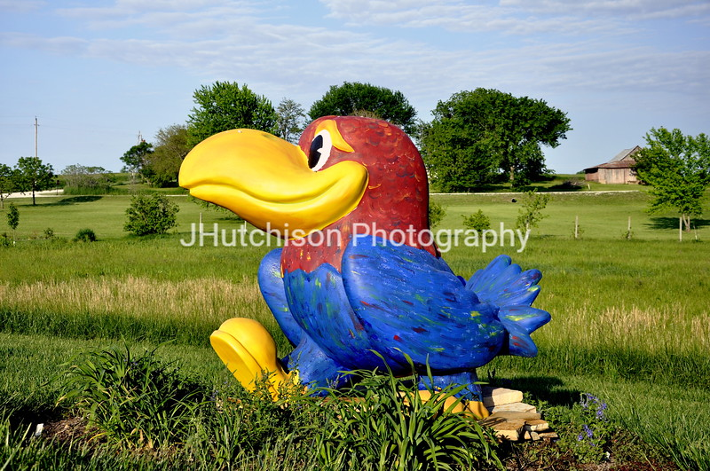 KU0017 - Primary Hawk