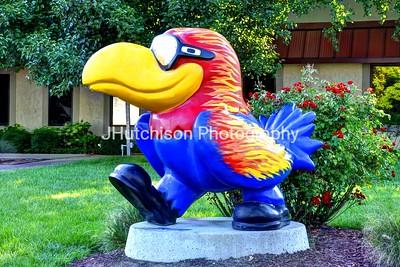 KU0005 - Hot Hawk