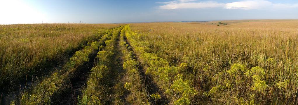 Follow the Yellow Broom Road