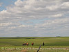Horses in Eastern Kansas (2)