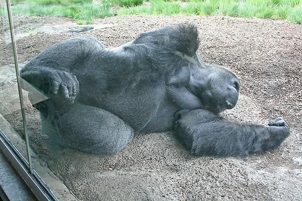 Sedgwick Zoo